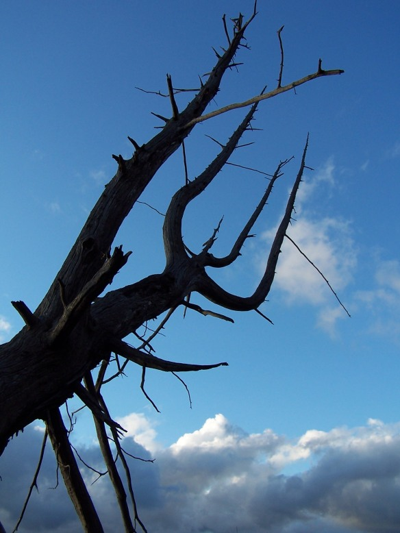 Pitchfork Tree, Sleeping Bear Dunes, https://huffygirl.wordpress.com, © Huffygirl 2012