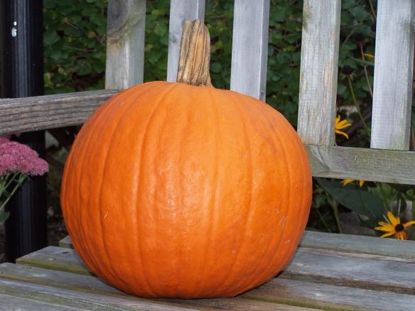 Pumpkin on bench, https://huffygirl.wordpress.com, © Huffygirl 2011