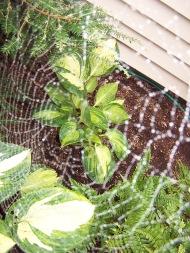 Charlotte's web 2, https://huffygirl.wordpress.com, © Huffygirl 2012