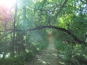 2 Sunny green path, https://huffygirl.wordpress.com, © Huffygirl 2012