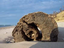 Summer driftwood, https://huffygirl.wordpress.com, © Huffygirl 2012