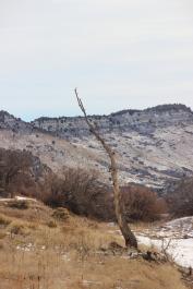 Lone tree, Ken Caryl Canyon