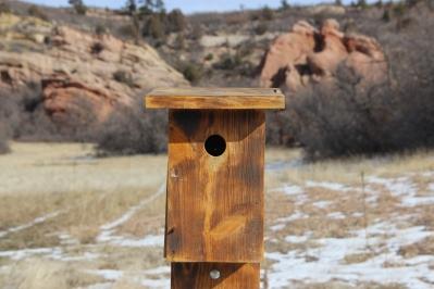 Nest box, Ken Caryl Canyon