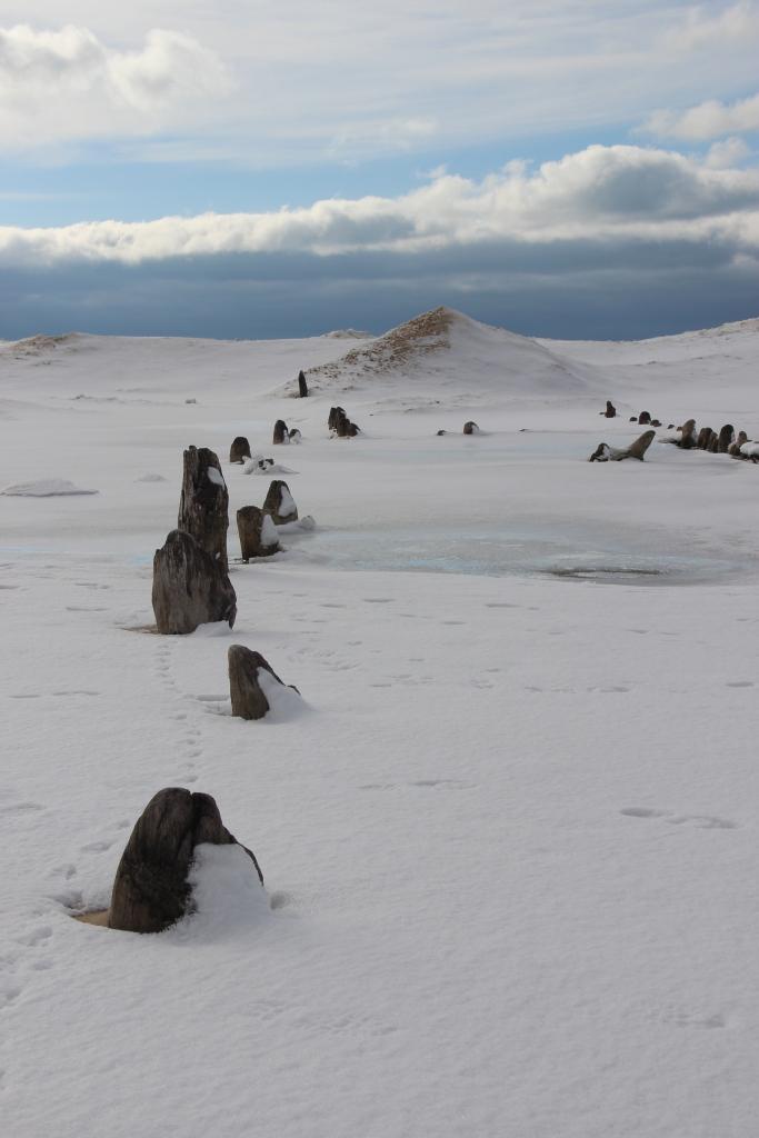 Ancient pier pillings with sand dunes in the distance resemble a lunar landscape.