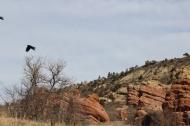 Birds and cliff, Ken Caryl, 2502, https://huffygirl.wordpress.com, © Huffygirl 2013