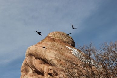 Birds, Ken Caryl Canyon, 2505, https://huffygirl.wordpress.com, © Huffygirl 2013
