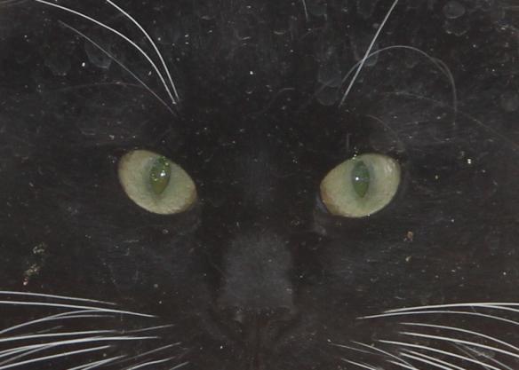 Kitty, https://huffygirl.wordpress.com, © Huffygirl 2013